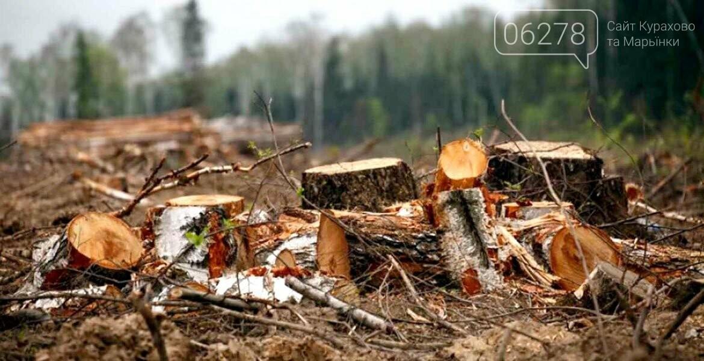 В Марьинском районе продолжается незаконная вырубка леса!!!, фото-1