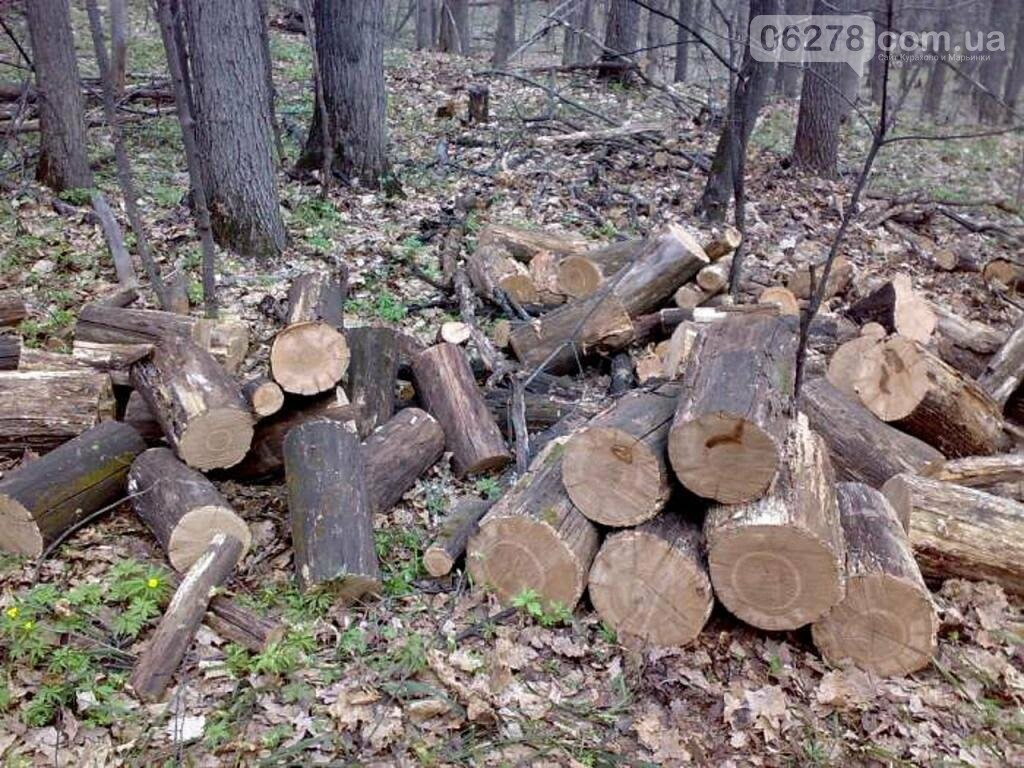 В Курахово бунтуют жители города!Начали строительство и срубили 100- летние дубы!, фото-1
