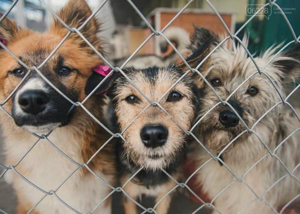 Приют для бездомных животных-мечта жителей города Курахово!, фото-1