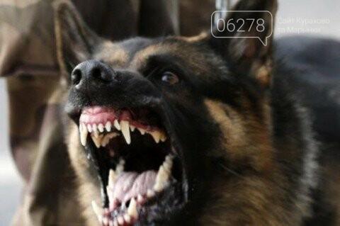 К большому сожалению, в Днепропетровске умер ребёнок,которого покусали собаки!, фото-1